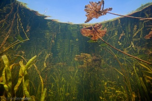 waterplanten landschap