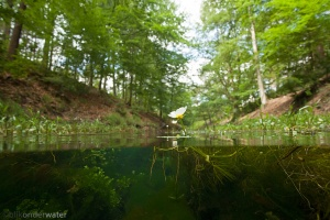 bloeiende waterplanten, helder water, onderwaterfotografie,