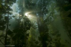 helder water, onderwaterfotografie, duiken, onderwaterfotografie, blikonderwater.nl, blik onder water, inundatie, uiterwaarden, onder water, overstroming