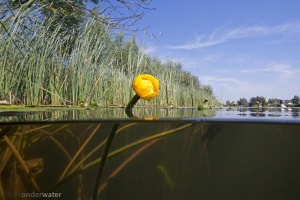 wildernis onderwater, onderwaterfotografie, waterbeleving, blikonderwater, documantaire, nederland leeft met water