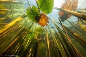 wildernis onderwater, onderwaterfotografie, waterbeleving, blikonderwater, documantaire, nederland leeft met water