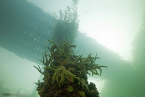 helder water, onderwaterfotografie, zuurstof, kunst, onderwaterfilmers, onderwaterfilm, onderwaterfotograaf