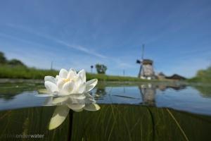 helder water, onderwaterfotografie, duiken, onderwaterfotografie, blikonderwater.nl, blik onder water,www.blikonderwater.nl, onder water, sloot; poldersloot; Hollands;