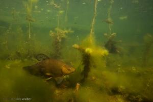 onderwaterfotografie, helder water, zeelt