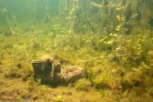 verloren schoen, schoen vissen, afval, onderwater