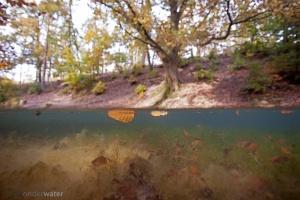 Helfst, onderwaterfotografie, onderwaterbeeld, bladeren, blad, spreng