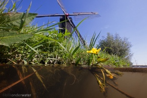 hollandse molen, Kornsche Boezem, Watergentiaal, Holland, natura 2000, wildernis onder water, wildernisonderwater