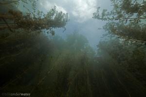 helder, gezond water, wildernis onder water, wildernisonderwater