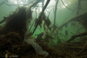 baars, perca fluviatilis, rivierhout, dood hout, structuur, onderwaterfotografie, KRW maatregel, viseitjes, paai, rivierhout