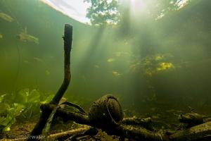 helder, onderwater; onderwaterfotografie, blikonderwater, blik onder water, onderwaterfilm, recreatie, vissen, waterschappen, vismigratie, unie van waterschappen,